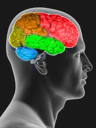 Omega 3 Brain